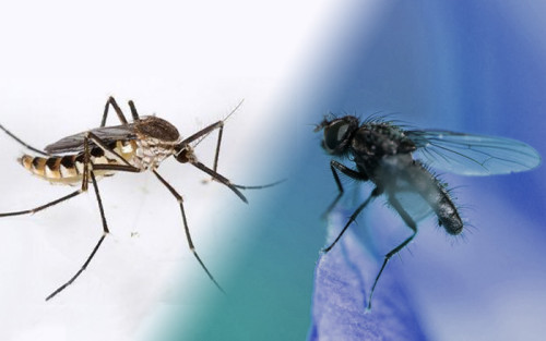 Where Did the Mosquitoes Go During the Day?