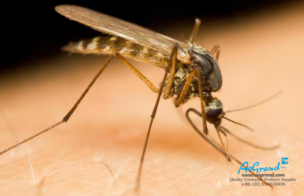 How Do Mosquitos Find Their Target?